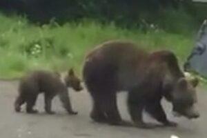 alerta!-ursi-pe-o-strada-dintr-un-municipiu-muresean!