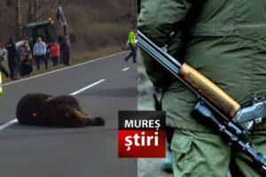 s-a-deschis-dosar-penal-dupa-impuscarea-ursului!-cum-a-fost-ucis-ursul-de-500-kg