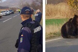 animal-society,-reactie-dura-in-cazul-ursului-lasat-18-ore-in-agonie!