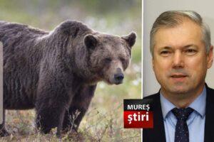 acum!-presedintele-cj-mures-transmite-un-mesaj-cu-privire-la-prezenta-ursilor,-din-pozitia-de-vanator!