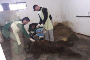 astazi:-un-urs-lovit-de-masina-a-fost-eutanasiat-in-sanctuarul-din-zarnesti