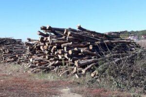 sanctiuni-de-zeci-de-mii-de-lei-si-lemn-confiscat-de-la-o-societate-comerciala-din-mures