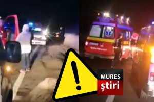 update:-traieste-ursul-care-a-fost-lovit-de-masina-la-balauseri!-video