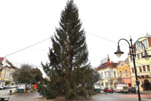 a-fost-montat-bradul-in-centrul-municipiului-targu-mures