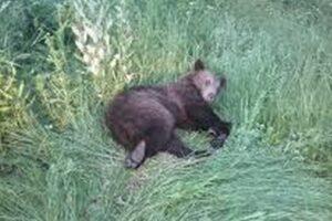 urs accidentat mortal in mures