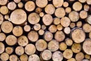 analiza.-la-ce-pret-a-ajuns-metrul-cub-de-lemn-in-mures?