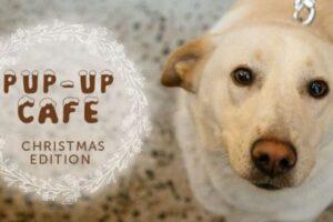iubitorii de animale sunt asteptati la pup up cafe christmas edition