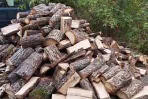 actiuni-pentru-prevenirea-taierilor-ilegale,-furtului-de-material-lemnos-si-comercializarii-neautorizate-a-pomilor-de-craciun