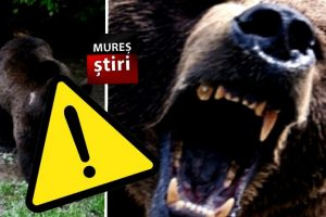 alerta-extrema!!!-urs-pe-strazile-dintr-un-municipiu-muresean!-foto