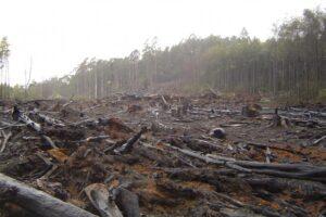 ministrul-mediului-vrea-stoparea-urgenta-a-defrisarile-ilegale