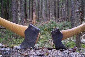 doi-mureseni,-retinuti-pentru-taieri-ilegale-de-arbori