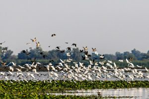 administratia rezervatiei biosferei delta dunarii are un nou guvernator