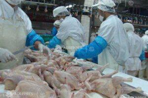 carne-de-pasare-de-la-fermele-din-ungaria-unde-exista-gripa-aviara,-la-vanzare-in-mures