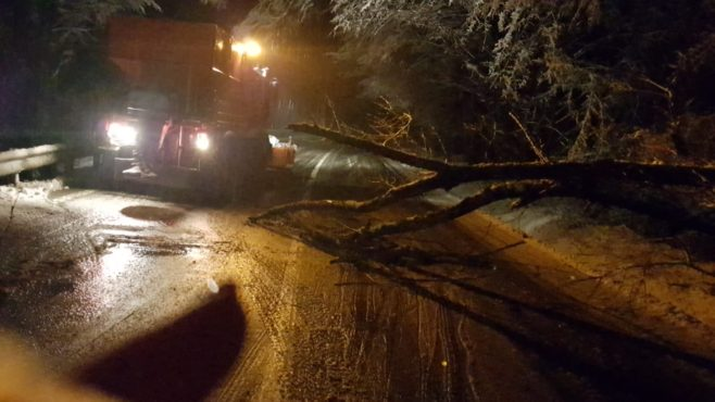 trafic blocat din cauza unui copac cazut