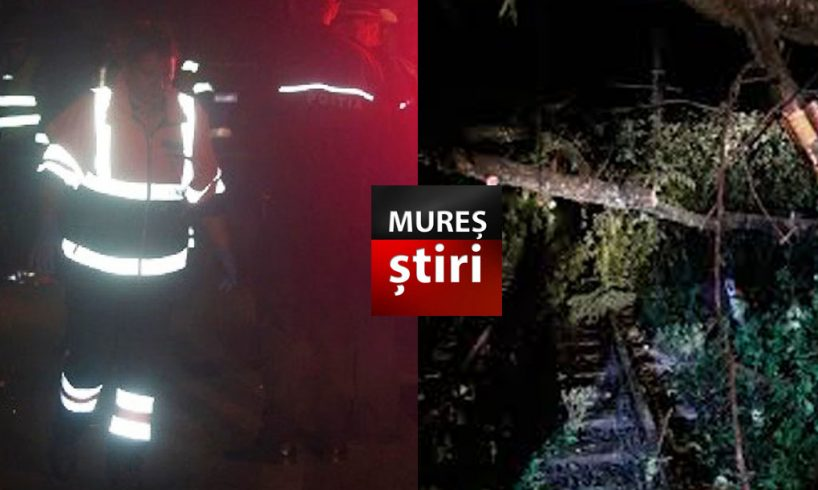 acum peste 150 de persoane blocate in trenuri dupa ce un copac a cazut pe linia ferata in mures