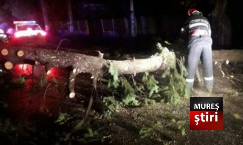 un copac cazut pe carosabil a blocat circulatia rutiera pe dj15 e578