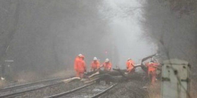 mures tren international blocat de un copac cazut un alt tren oprit intr o gara