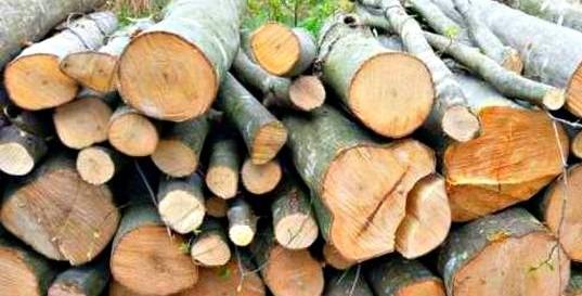 material lemnos confiscat de politisti
