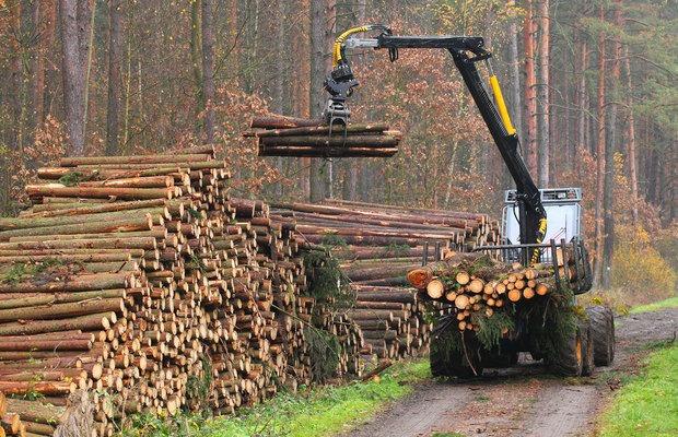 romania are 30 de zile pentru a pune capat exploatarilor forestiere ilegale