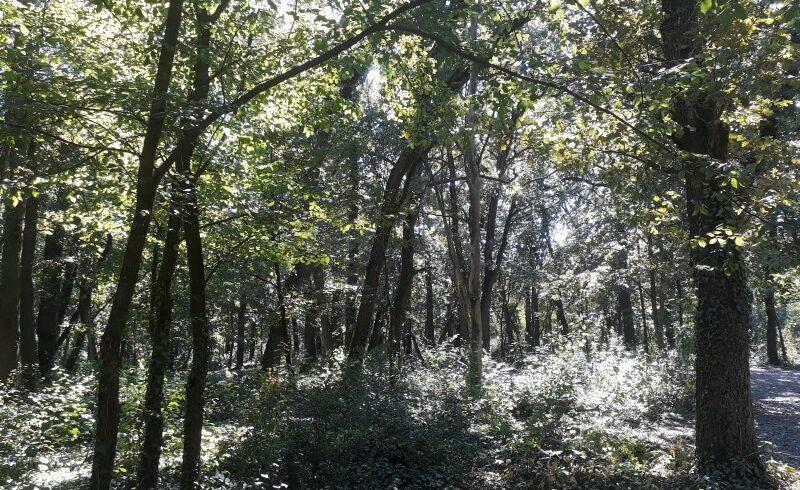 romania poate ajunge la curtea europeana de justitie pe taieri ilegale de lemn si poluare