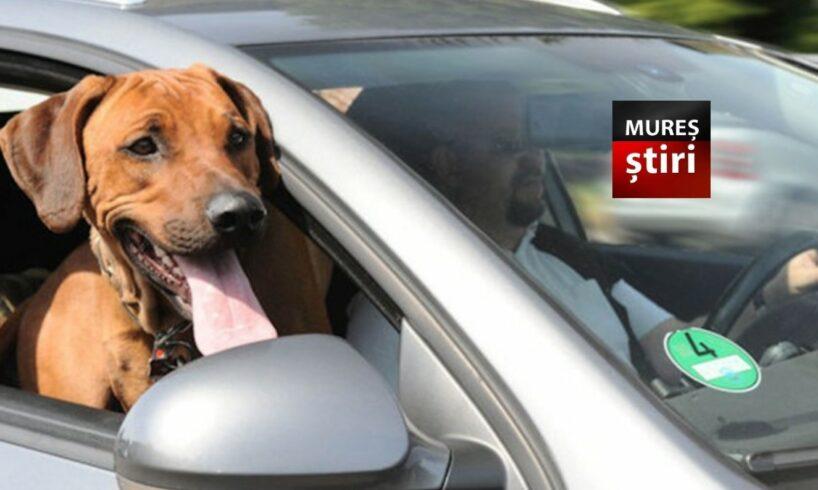 atentie amenzi imense pentru transportul animalelor de companie
