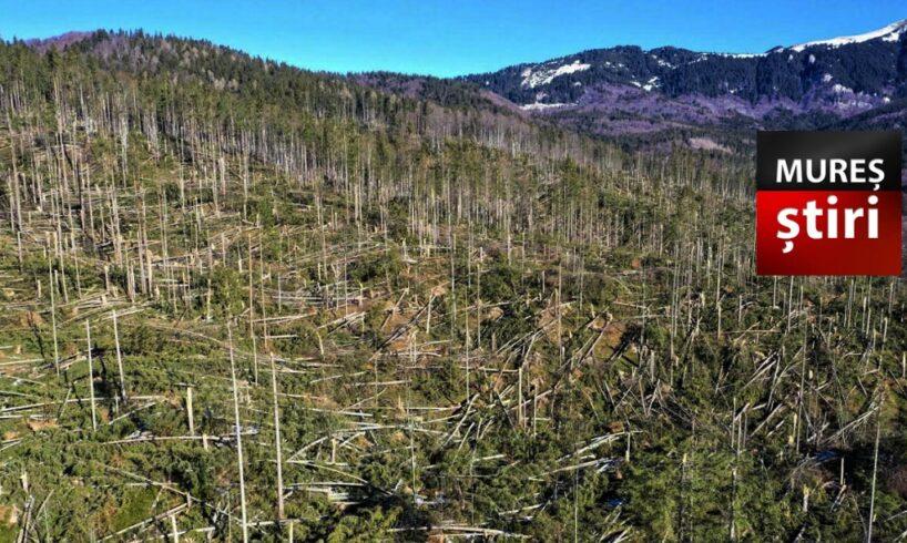 e oficial sute de mii de metri cubi de copaci pusi la pamant de furtuna in mures