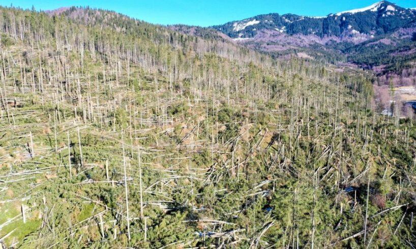 controale dupa ce 14 mii de hectare de paduri din mures au fost doborate de vant