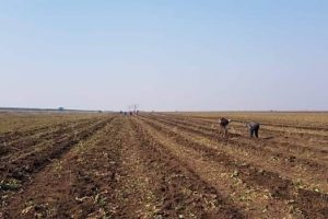 lipsa-fortei-de-munca-ii-determina-pe-fermieri-sa-aduca-muncitori-din-strainatate