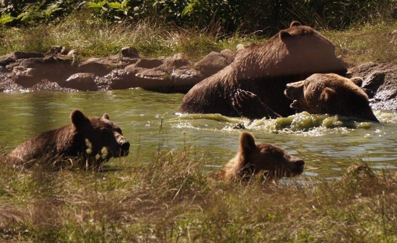 ministrul mediului va face si statul un sanctuar pentru ursi