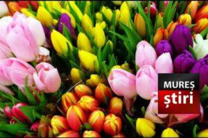 la multi ani tuturor femeilor si mamelor de 8 martie ziua voastra