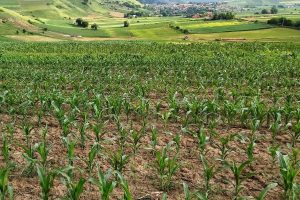 culoare-protejate-pentru-transportul-materiilor-prime-si-al-marfurilor-agricultorilor