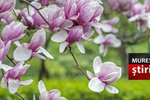 credinciosii-catolici-sarbatoresc-astazi-duminica-floriilor!