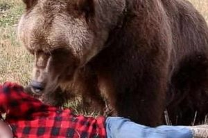 muresean-aflat-in-autoizolare-atacat-de-un-urs!
