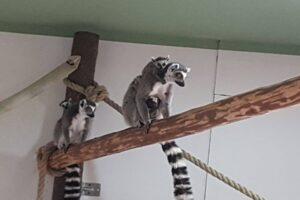 familia-zoo-brasov-s-a-marit-cu-5-noi-membri