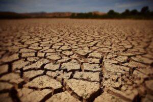 toate-culturile-de-toamna-sunt-afectate-de-seceta