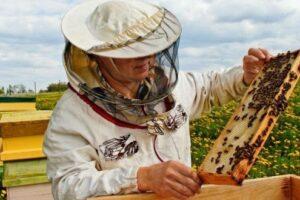prevenirea-intoxicatiilor-la-albine