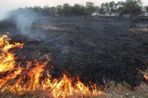 arderea-miristilor-si-a-vegetatiei-uscate-se-face-doar-cu-respectarea-legii
