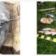 arme-de-foc-descoperite-in-urma-unor-perchezitii-in-harghita-si-mures
