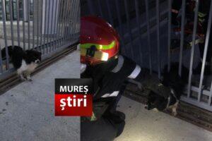 imagini-video-cu-salvarea-unui-catel-ghinionist,-blocat-in-poarta-unei-fabrici-din-mures!
