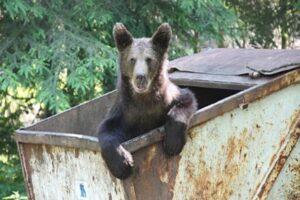 cj-covasna,-harghita,-mures-si-brasov,-petitie-la-parlamentul-european-pentru-solutionarea-problemei-ursilor
