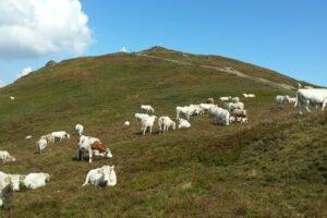 amenintati-de-faliment,-crescatorii-de-vaci-vor-sa-protesteze-la-ministerul-agriculturii