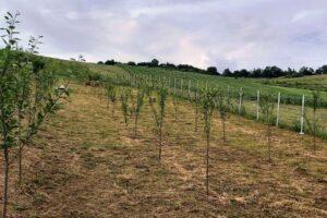 peste-600.000-de-puieti-au-fost-plantati-in-trei-ani-prin-programul-de-reimpadurire-padurea-de-maine