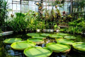 gradini-botanice-din-romania