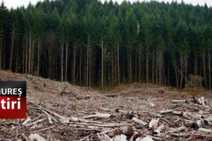 comisia-europeana-cere-romaniei-sa-puna-capat-exploatarii-forestiere-ilegale!