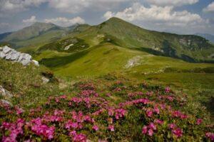de-vizitat:-parcul-national-muntii-rodnei