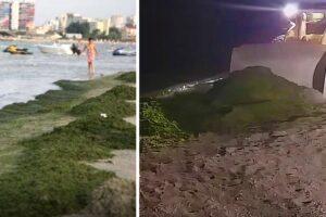 pe-litoralul-romanesc,-tone-de-alge-au-fost-aduse-la-mal-in-ultimele-48-de-ore