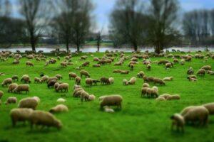 cereri-pentru-ajutor-de-stat-fermierilor-in-cresterea-animalelor