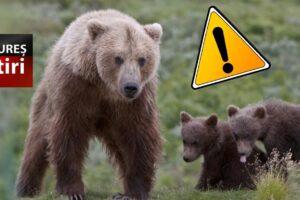 teroare-intr-o-localitate-din-mures:-ursii-au-atacat-animalele-din-gospodarii!
