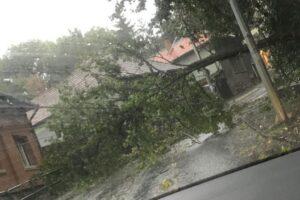copac-cazut-pe-carosabil