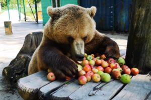 peste-100-de-pagube-produse-de-ursi-doar-anul-acesta-in-mures
